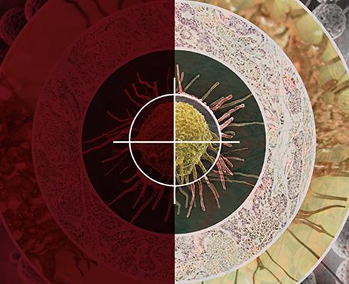 War on Cancer Middle East 2018